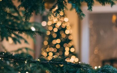 Zin in een avontuur in gezellige kerstsferen? Bezoek dan hét kerstbomen doolhof!